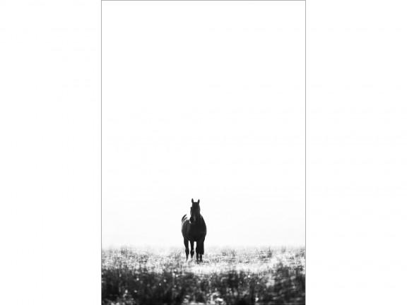 UWAŻNOŚĆ fotografia czarno-biała 50x70cm