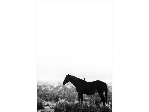 PRZYJAŹŃ fotografia czarno-biała 50x70cm