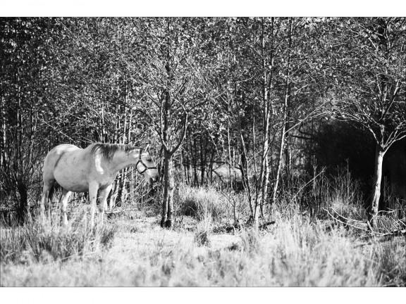 CZEKANIE fotografia czarno-biała 50x70cm