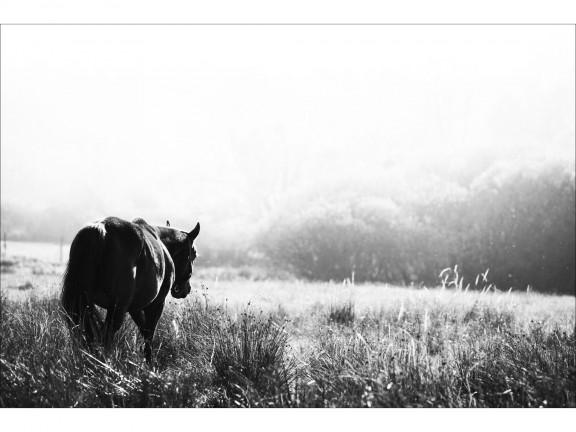 SAMOTNOŚĆ fotografia czarno-biała 50x70cm