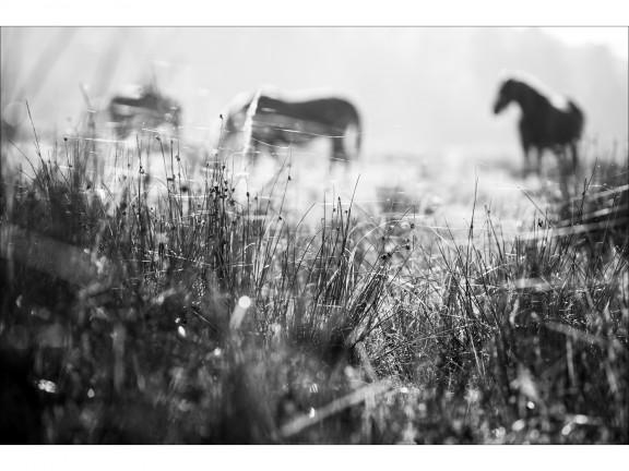 CISZA fotografia czarno-biała 50x70cm