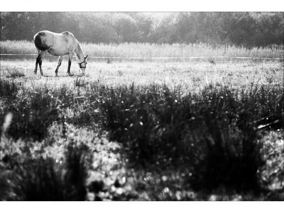 BEZTROSKA fotografia czarno-biała 50x70cm