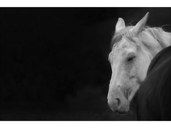 SEN fotografia czarno-biała 50x70cm