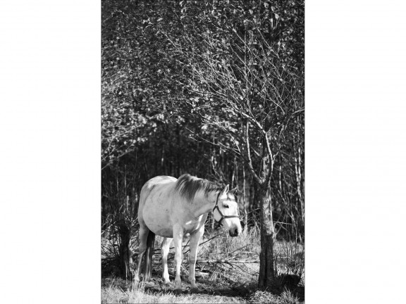 CZEKANIE 2 fotografia czarno-biała 50x70cm
