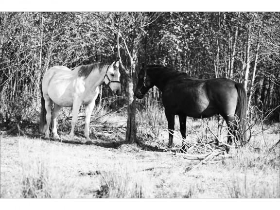 RAZEM fotografia czarno-biała 50x70cm